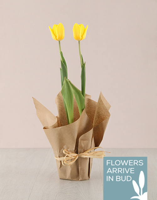 birthday: Yellow Tulip Plant in Craft Paper!
