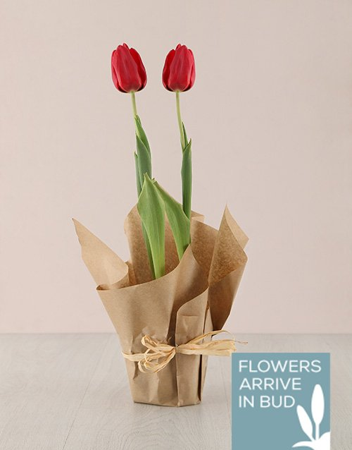birthday: Red Tulip Plant in Craft Paper!