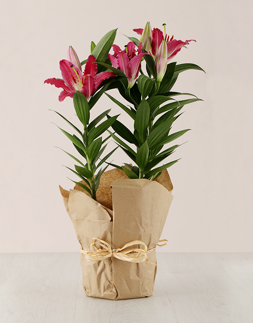 secretarys-day: Stargazer Lily in Craft Paper!