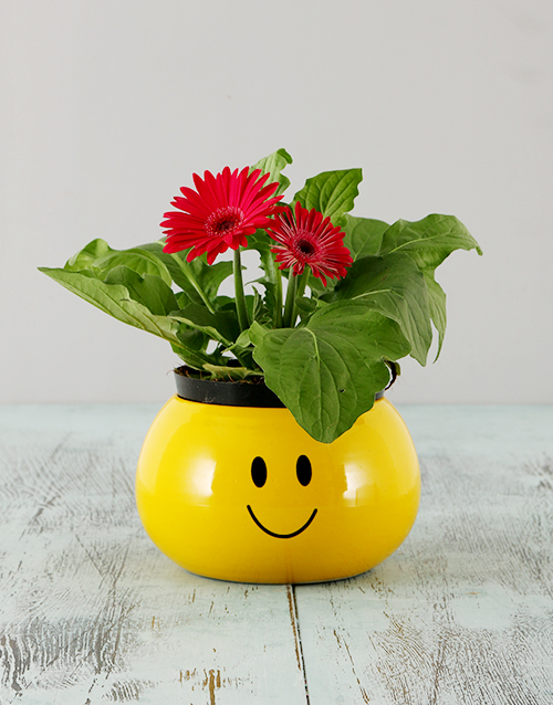 gerbera-daisies: Mini Gerbera in a Smiley Pot!