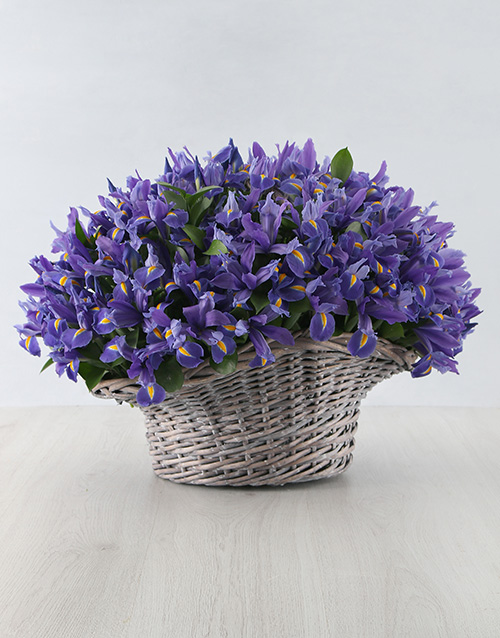 house-warming: 100 Irises in a Basket!