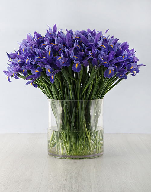 flowers: 100 Irises in a Vase Arrangement!