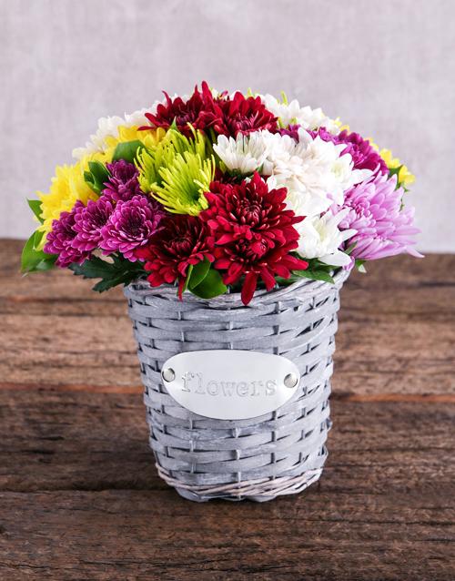daisies: Mixed Sprays in Grey Basket!