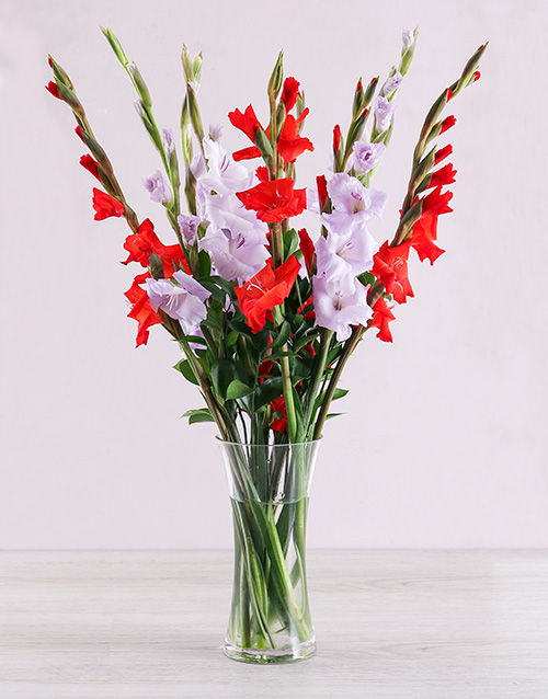 apology: Purple and Red Gladiolus Vase!