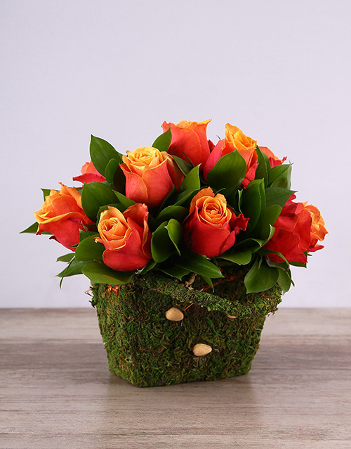 colour: Cherry Brandy Roses in a Moss Basket!