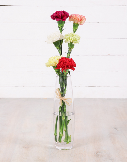 carnations: Simply Six Mixed Carnations!