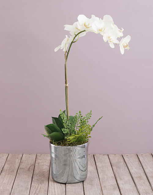 get-well: Silk Phalaenopsis Orchard and Fern!