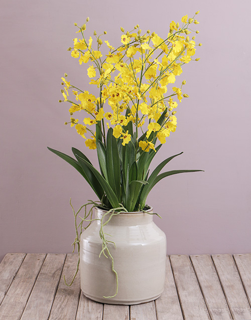 get-well: Silk Dancing Lady Orchid in a Reactive Ceramic Pot!