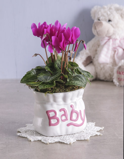 colour: Cyclamen in Baby Pottery!