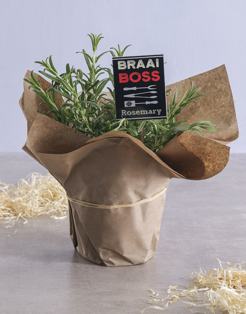 green: Rosemary Plant with Braai Rub Recipe!