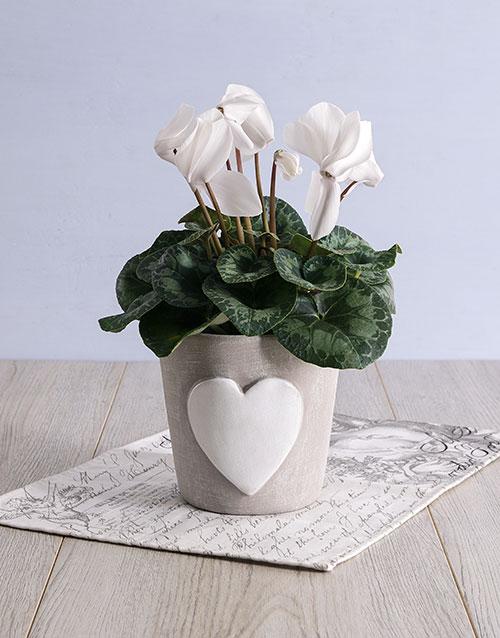 easter: White Cyclamen in Heart Ceramic Pot!