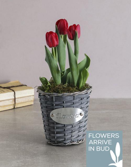 seasonal: Red Tulips in Flower Wicker Basket!