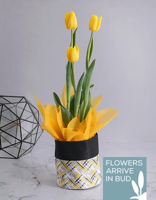 tulips: Yellow Tulip in Fabric Pot Cover!