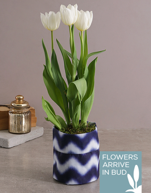 tulips: White Tulip in Royal Blue Fabric Pot Cover!