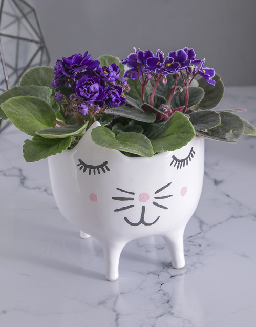 colour: African Violets in Cat Pot!