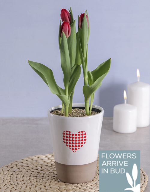 colour: Red Tulips in Heart Pot!