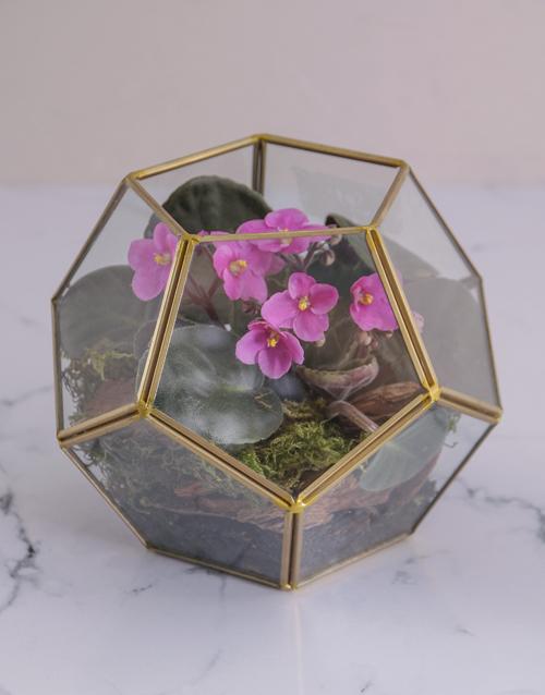 flowers: Glamorous African Violet Terrarium!