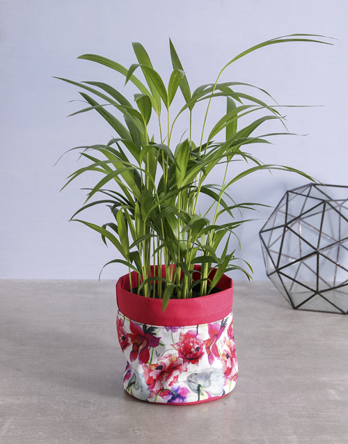 plants: Indoor Areca Bamboo Planter!