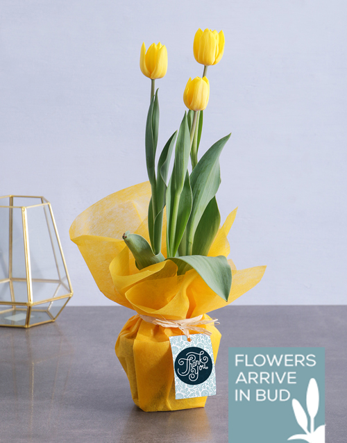 flowering: Thank You Tulips!
