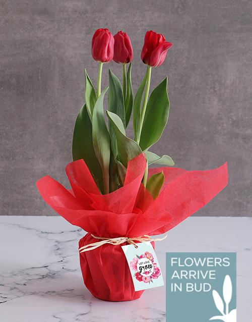 seasonal: Red Love Tulips!