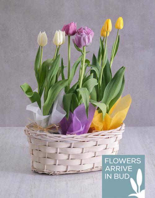tulips: Tricolour Tulips in a White Wicker Basket!