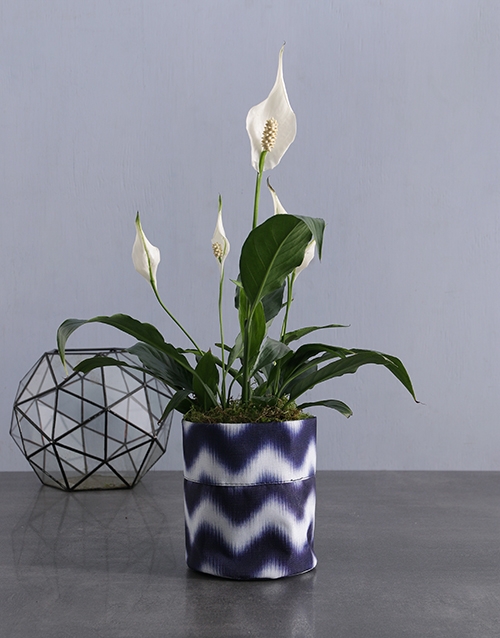 anniversary: Peace Lily in Delf Blue Waterproof Fabric Pot!