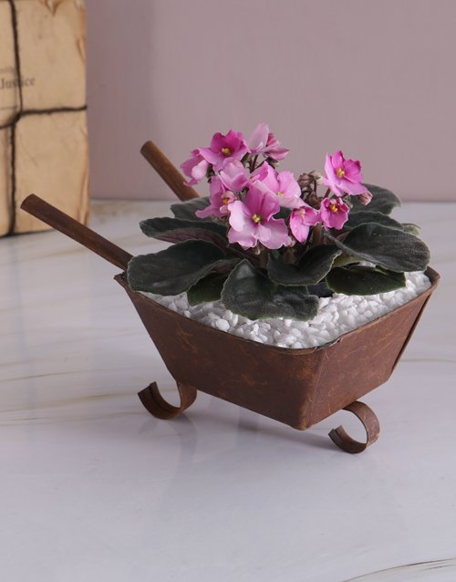 plants: African Violet in Mini Wheelbarrow!
