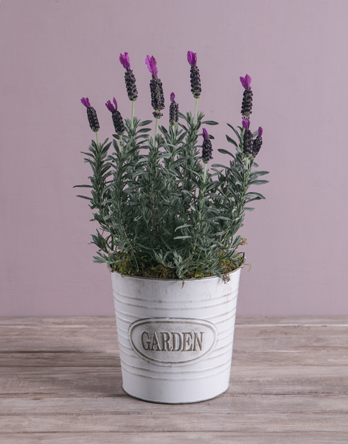 colour: Serene Lavender in Meadow Garden Bucket!