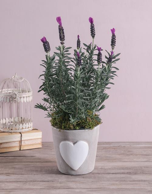 colour: Loving Lavender in Ceramic!