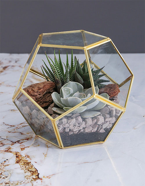 engagement: Succulent in a Gold Geo Terrarium!