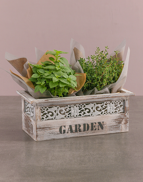 herbs: Potted Basil And Thyme!