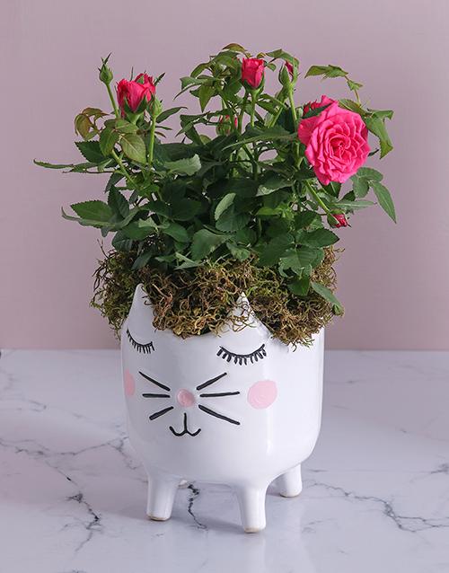 flowers: Rose Bush in Kitty Vase !