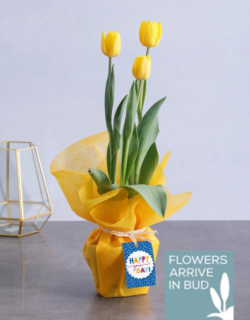 flowering: Happy Yellow Tulips!
