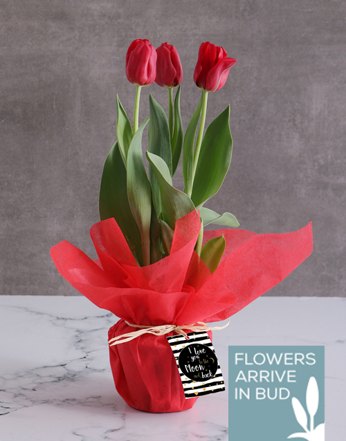 flowers: Red Moon and Back Tulips!