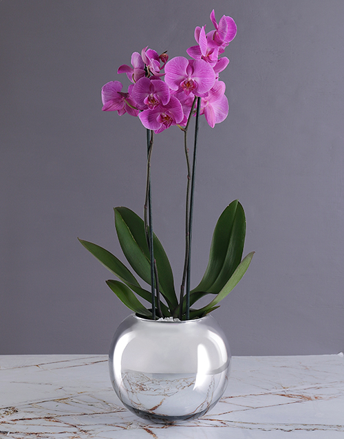 christmas: Orchid in Silver Globe!
