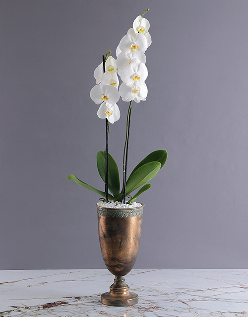 sympathy: Exquisite Doha Orchid Pot!