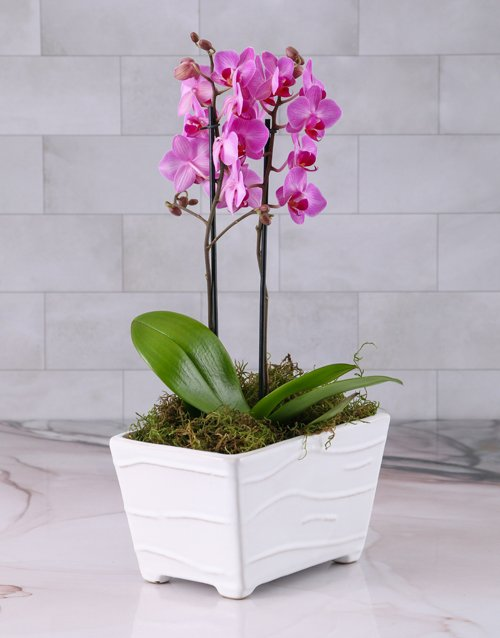 flowering: Pink Orchid in Textured Ceramic Planter!