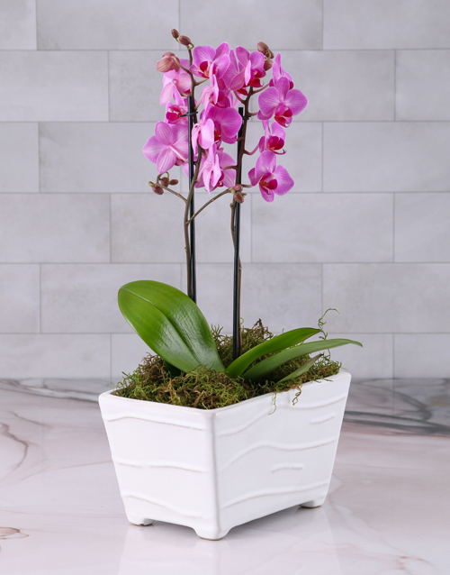 orchids: Pink Orchid in Textured Ceramic Planter!