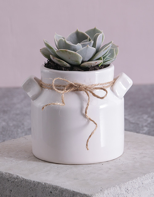 get-well: Succulent in a Mini Milk Can Planter!