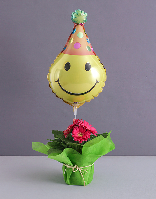 birthday: Wrapped Gerbera Plant for a Birthday!