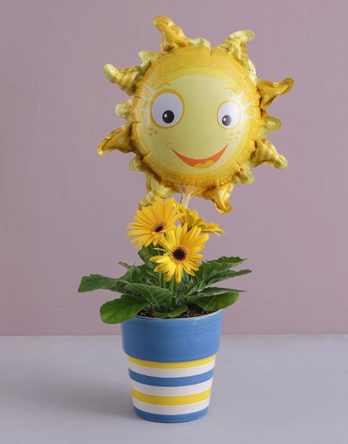 birthday: Sunshine Gerbera Plant!