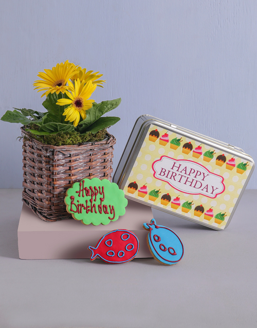 colour: Birthday Gerbera Plant and Cookie Tin!