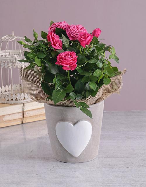 anniversary: Heartfelt Rose Bush!
