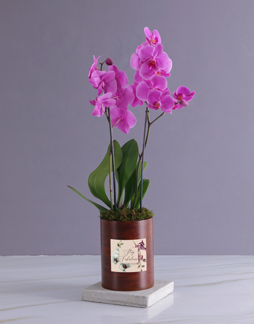personalised: Stay Fabulous Orchid In Wooden Cooler!