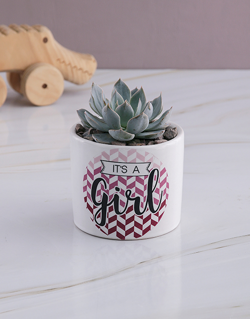 baby: Welcome Baby Succulent In White Ceramic Pot!