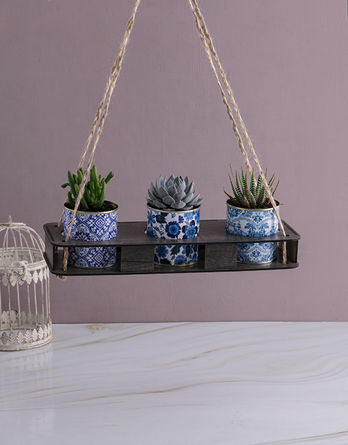 whats-new: Set Of Three Succulents In Delft Tin!
