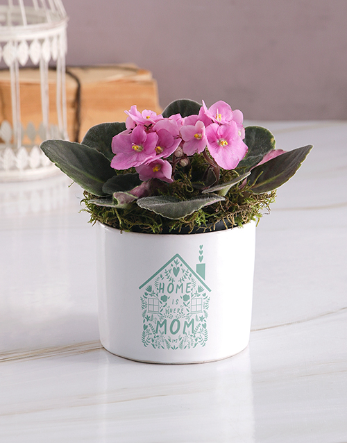 prices: Heart At Home African Violet!