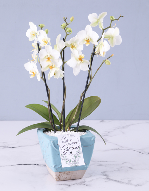 orchids: Orchids In A Pot!