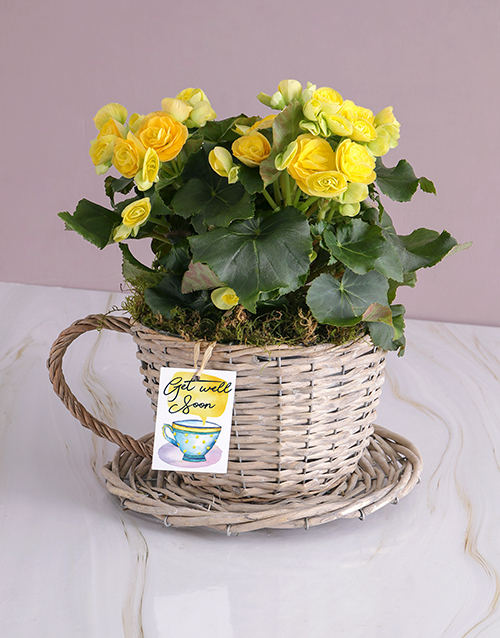 colour: Get Well Begonia Plant!