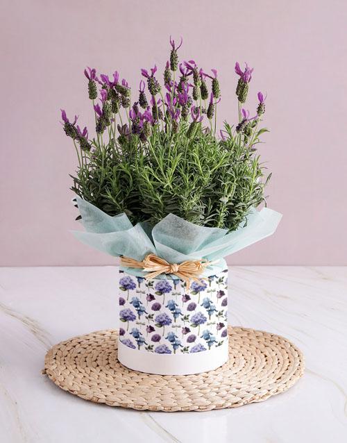 secretarys-day: For You Lavender!